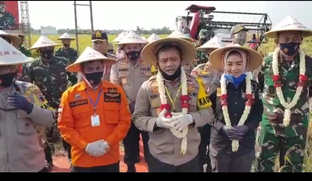 Ketahanan Pangan TNI-Polri dan Pemkab Panen Raya 220 Hektar Padi di Pemalang